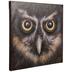 Owl Close-Up Canvas Wall Decor