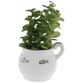 Succulent In White Pitcher