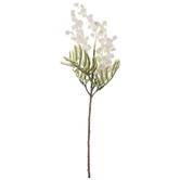 White Vachellia Pick