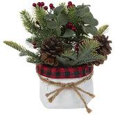 Pine, Holly & Eucalyptus In White Pot