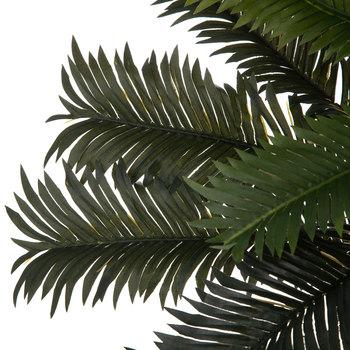 Cycas Palm Bush