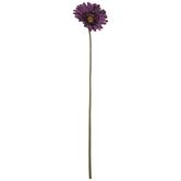 Purple Gerbera Daisy Stem