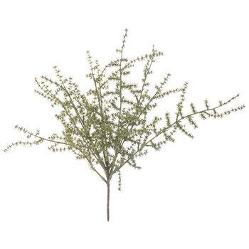 Wild Asparagus Bush
