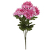 Pink Mum Bush