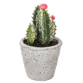 Flowered Cactus in Gray Cement Pot