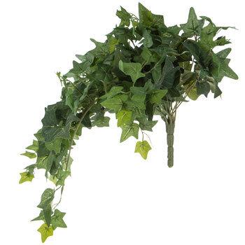 Small Green English Ivy Hanging Bush