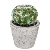 Round Cactus in Gray Cement Pot