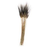 Black Beard Wheat Bundle