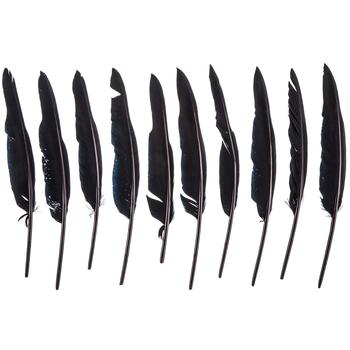 "Black Turkey Feathers - 9"" - 11"""