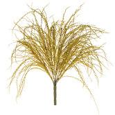 Seaweed Bush