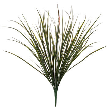 Green Reed Bush