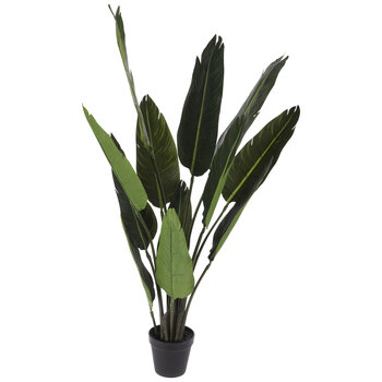 Bird Of Paradise Palm Leaves In Black Pot