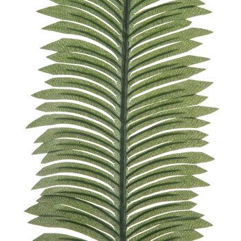 Green Cycas Fern Stem