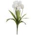 Cream White Tulip Bush