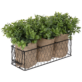 Boxwood Containers In Chicken Wire Basket