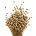Dried Happy Flower Bundle