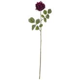 Plum Rose Stem