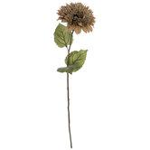 Almond Teddy Bear Sunflower Stem
