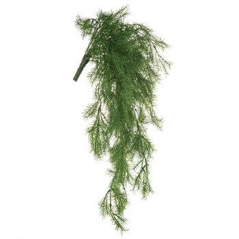 Springerii Fern Hanging Bush