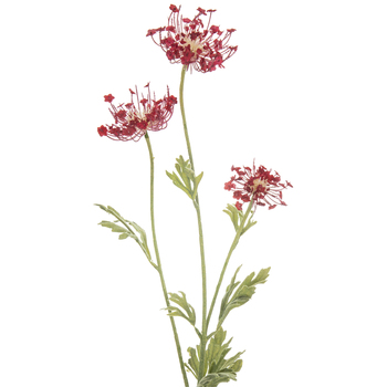 Red Queen Ann's Lace Stem