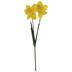 Yellow Daffodil Stem