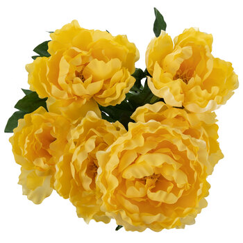 Yellow Peony Bush