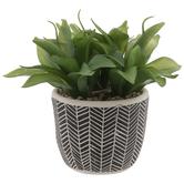 Aloe In Black & White Chevron Pot