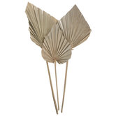 Natural Dried Palm Spears