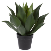 Spiky Succulent In Black Pot
