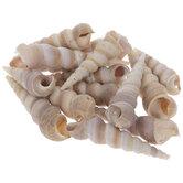 Turritella Shells