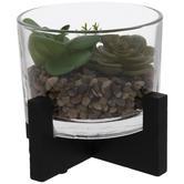 Modern Succulent Terrarium