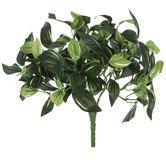 Dracaena Leaf Bush