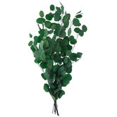 Forest Green Eucalyptus Bundle