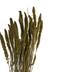 Moss Green Seteria Bundle