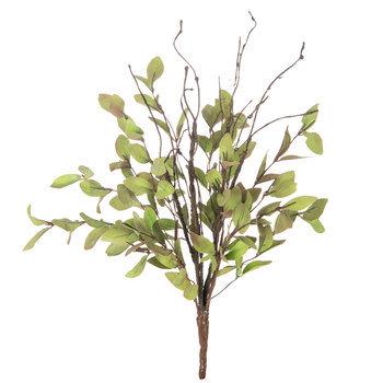Tea Leaf Bush