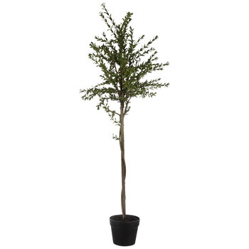 Myrtle Plant In Black Pot