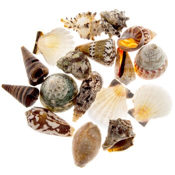 Philippine Mix Shells