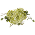 Light Green Hydrangea Bush