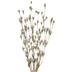 Pink Wildflower Bud Bush