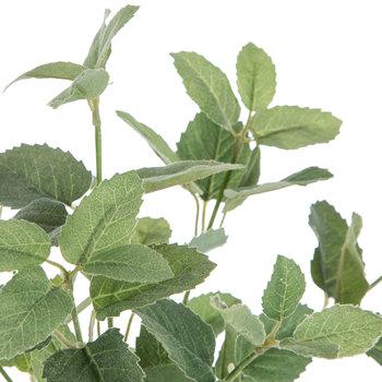 Mini Mint Bush