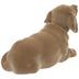 Dog Bobble Head