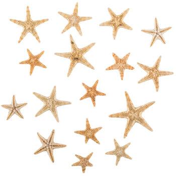 Mini Starfish Bezel Fillers