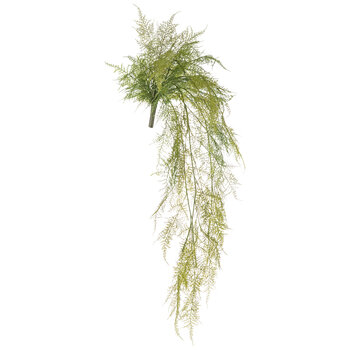 Lace Fern Hanging Bush