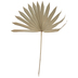 Dried Palm Fan Stem