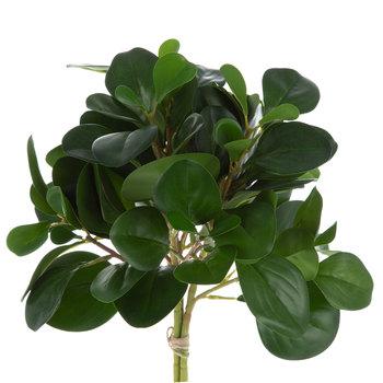 Green Leaves Succulent Bundle