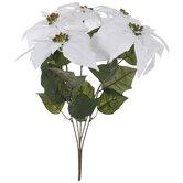 Velvet Poinsettia Bush