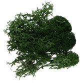 Green Plants Landscape Lichen