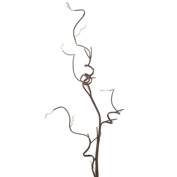 Brown Curly Willow Branch