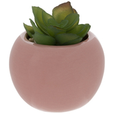 Succulent In Pink Pot