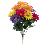 Fiesta Mix Gerbera Daisy Bush